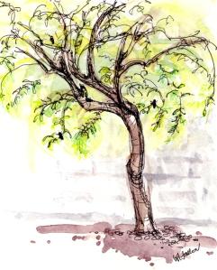 Backyard Mesquite (C) Wendy Fallon